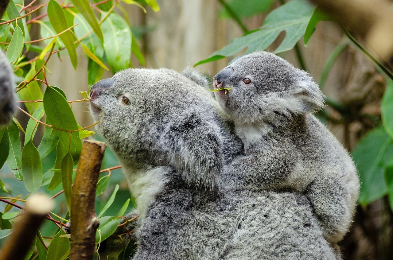 Ätherisches Öl des Monats März: Eukalyptus