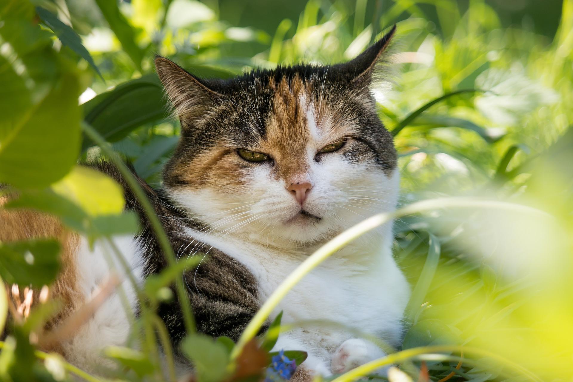 Herbstgrasmilben: Was tun, wenn Hunde und Katzen sich ständig kratzen?
