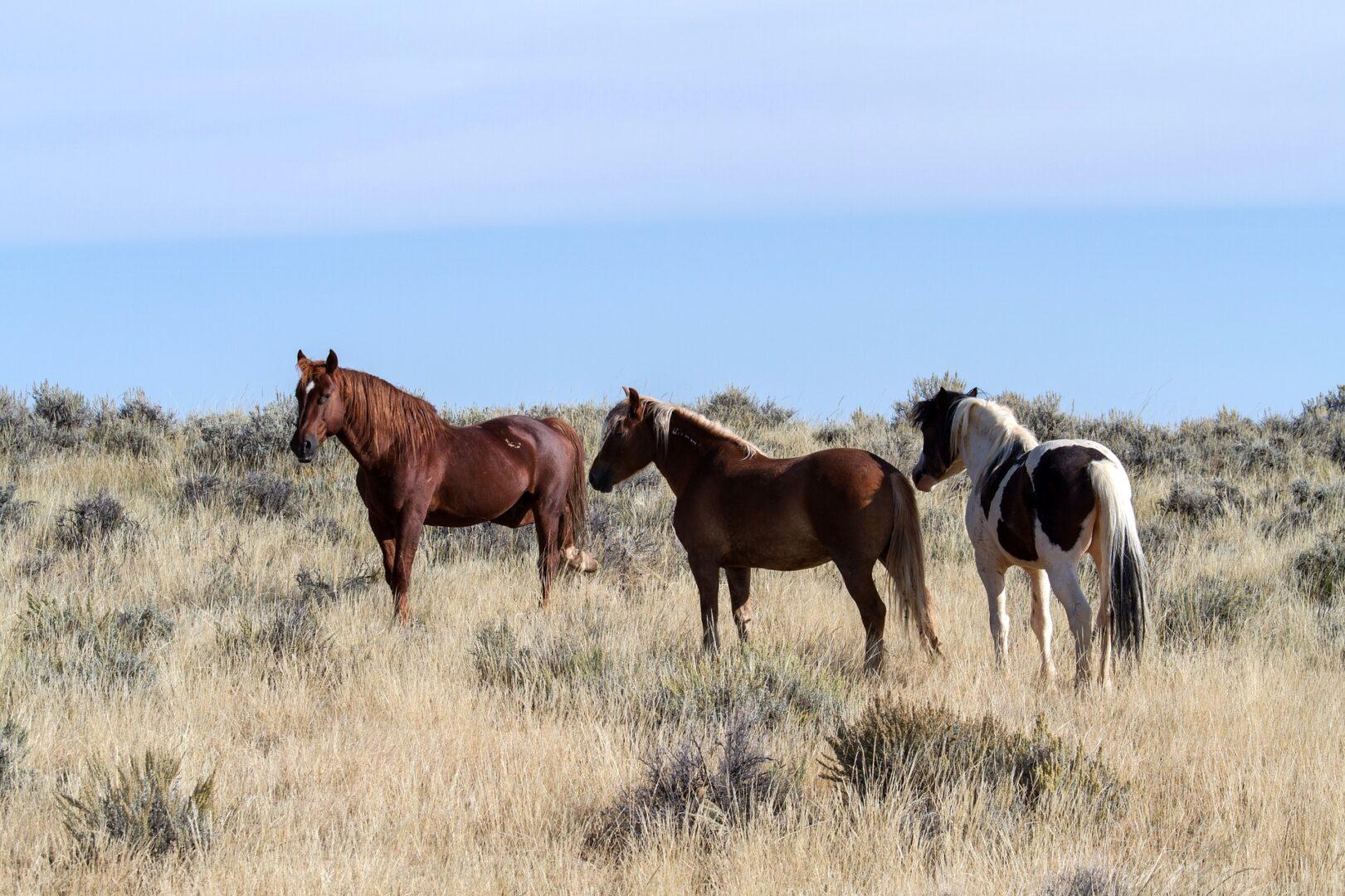 10 Tipps für eine artgerechte Pferdeernährung