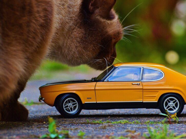 Kotzübel-  8 Tipps gegen Reiseübelkeit bei Hunden und Katzen